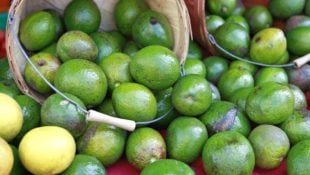 Avocado Prices to Nearly Double After Diminishing Crop Yield