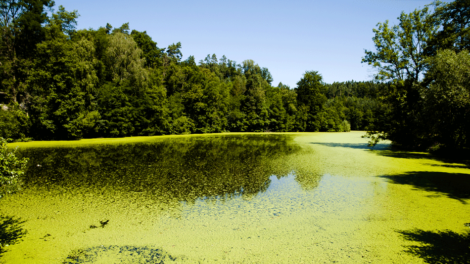 green-algae-sustainability