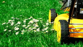 This Summer, You Have a Choice: Mow Your Lawn or Save the Earth