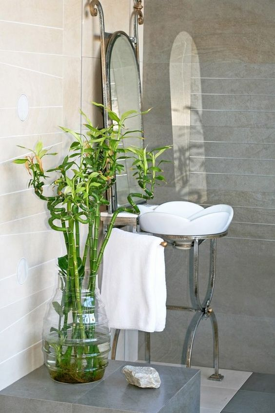 The 10 Best Bathroom Plants To Thrive In High Humidity Areashouse Plant No Window