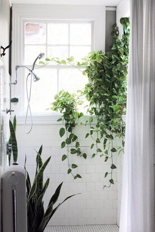 best plants for dark rooms, best plants for pool area, best plants for basements, best plants for sun room, best plants for feng shui, best plants for gardening, best plants for wet areas, best plants for containers patio, best plants for privacy, best plants for around a patio, best plants for entryway, plants that thrive in bathrooms, best plants for zone 6b, best plants for water, best plants for atriums, best plants for decks, best plants for glass, best plants for high desert, best plants for zone 10, best outdoor plants, on best plants for bathroom