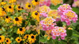 12 Garden Plants Made to Withstand the Summer Heat