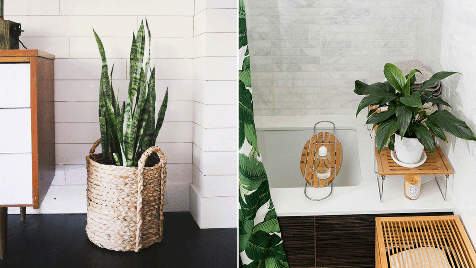 Good Bathroom Plants Part - 1: Best-bathroom-plants