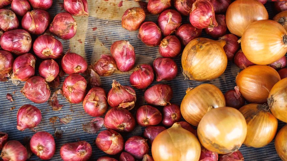 shallots-vs-onions