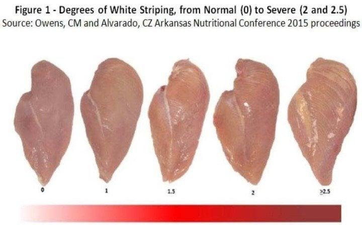 Chicken-Stripes
