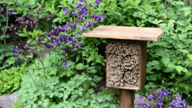 Horticultural Hive-Mind: A Gardener's Guide to Protecting the Bees
