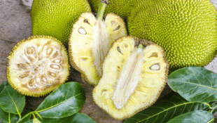 Jackfruit: What It Is, How to Cook with It, and 7 Recipes to Start