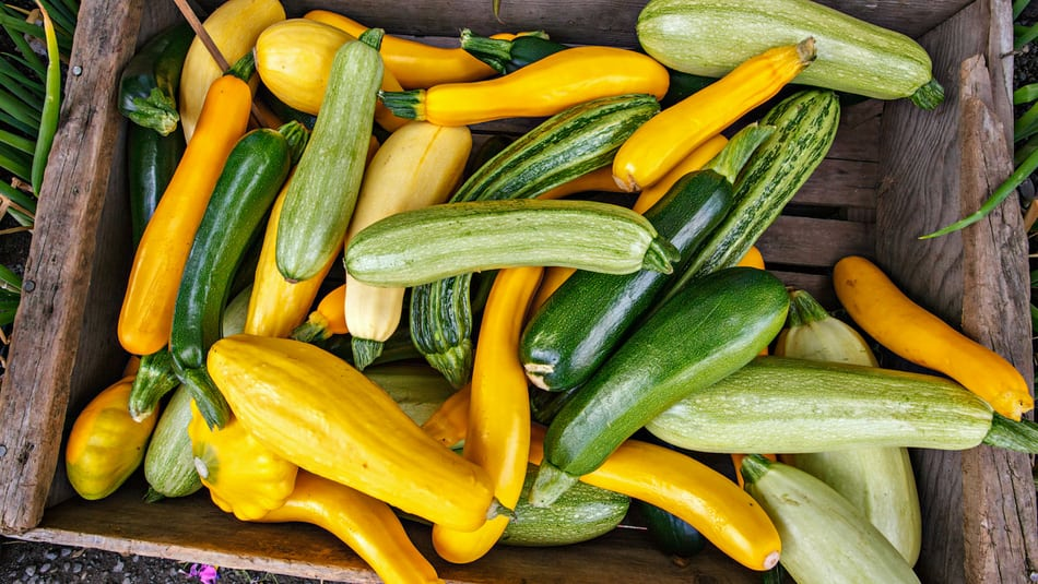 The Ultimate Guide on Summer Squash at the Farmer's Market