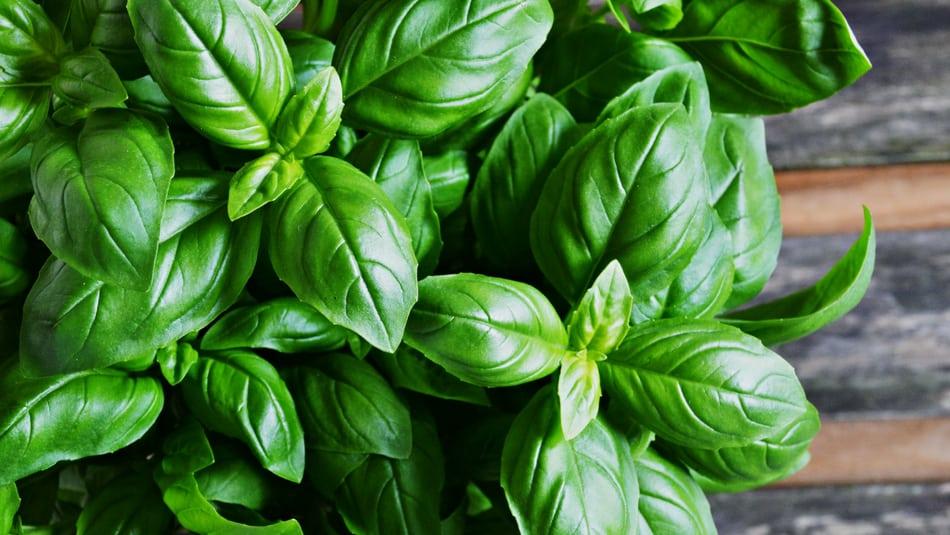 Preserve Fresh Basil