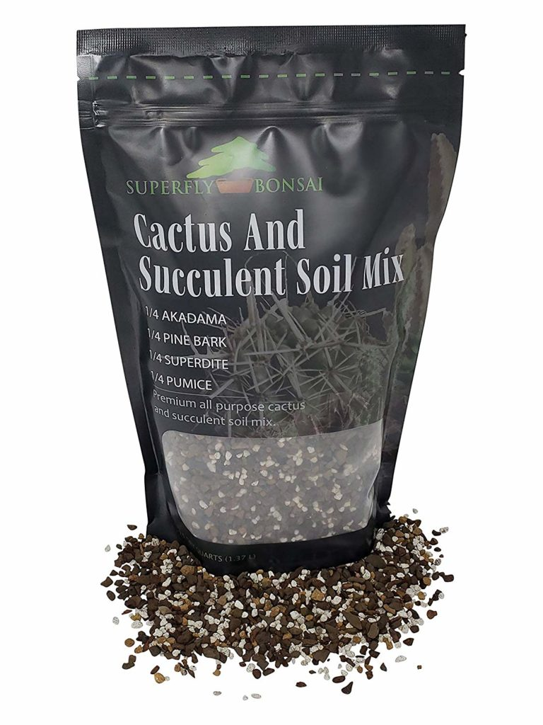 Best Succulent Soil