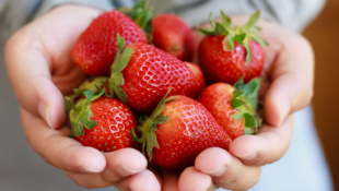 How To Keep Strawberries Fresh in the Fridge So They Last Longer
