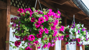 10 Hanging Plants to Buy This Spring & Summer