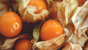 What are Ground Cherries and How to Grow Them
